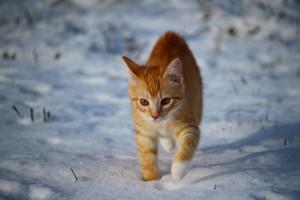 cat-1147266_960_720
